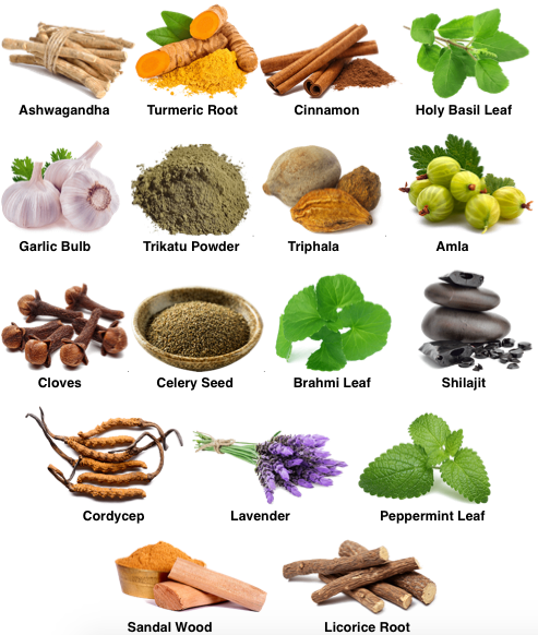 CHAKRA Ayurvedic Formula Ingredient